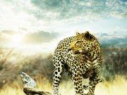 Фотообои на стену: Животные 19