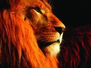 Лев,  изображение 3
