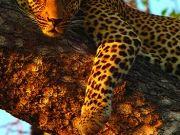 Леопард на дереве, изображение 4